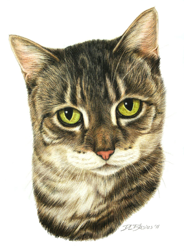 Abby Cat Portrait