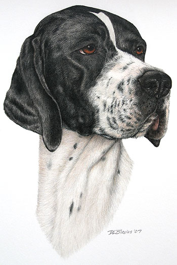Berta-Pointer-Portrait