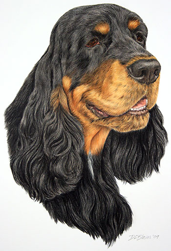 Simon-Field-Spaniel-Portrait