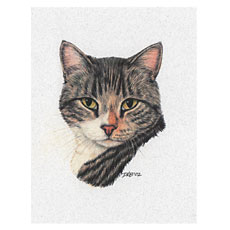 Cat-NoteCard-Tabby