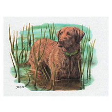 ChesapeakeRetriever-NoteCard