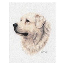 GreatPyrenees-NoteCard