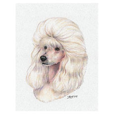 MinPoodle-NoteCard-White