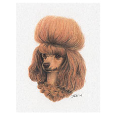 ToyPoodle-NoteCard